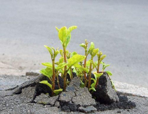 Balbuzie e Resilienza: 5 modi per resistere alle cadute